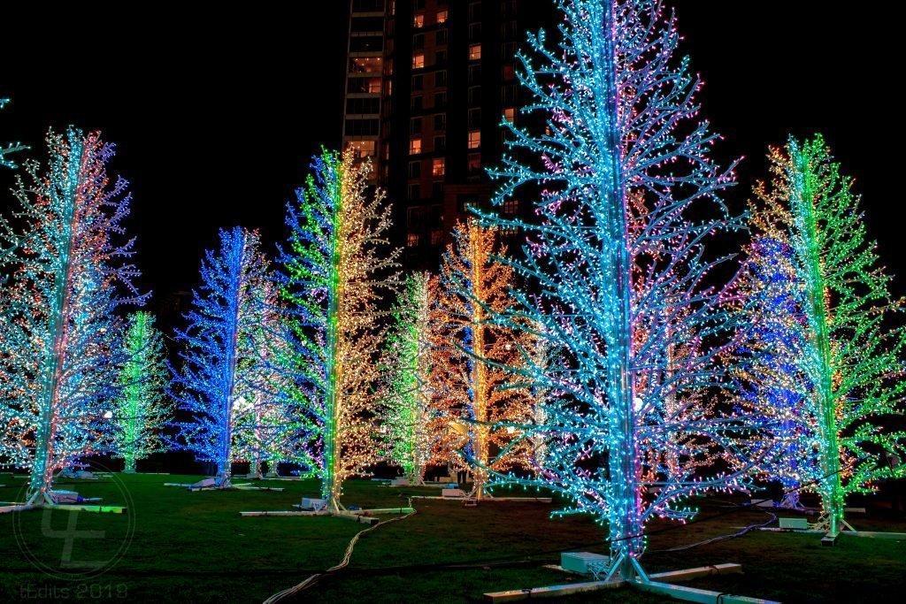 Canary Wharf Winter Lights 2019 - Sasha Trees, Adam Decolight